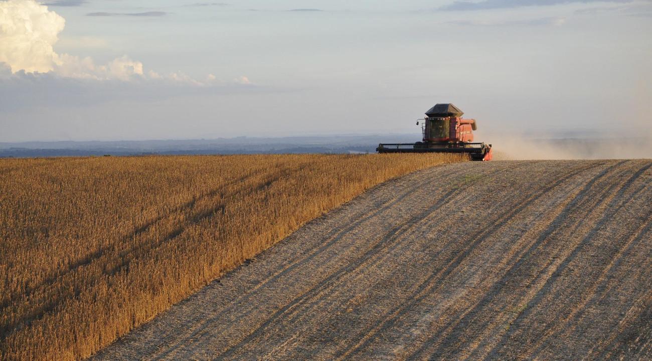 Estoque de produtos agrícolas tem queda de 17% no primeiro semestre